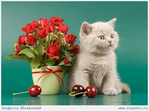 Кошка с цветами открытка с днем рождения 3