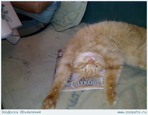 Пропал кот СПб