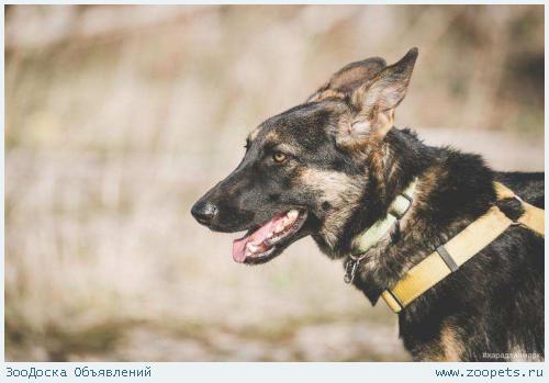 Собака Мира ищет хороших хозяев