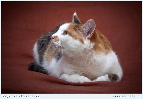 Подарите кошке жизнь!