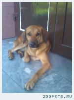 Собака по ул. Ирбитская