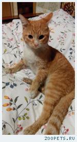 Нашелся котенок рыжый Братиславская