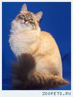 пропал кот питерский карнавальный