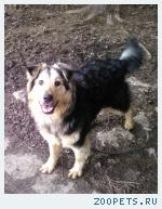 Ищу хозяев для собаки Евы