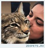 Продажа красивых котят РЫСИ!!!Канадской и Европейской рыси