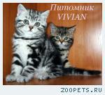 http://catvi.ru